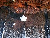 Χειμερινό φύλλο δυναμική διαμόρφωση χαρα&kapp πρώτο χιόνι Η ομορφιά του χειμώνα πάγωμα ημέρας E στοκ φωτογραφίες με δικαίωμα ελεύθερης χρήσης