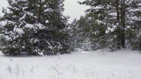 Χειμερινό χιονώδες δάσος απόθεμα βίντεο