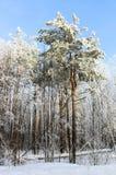 Χειμερινό χιονώδες δάσος Στοκ Εικόνες