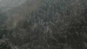 Χειμερινό χιόνι στο δάσος απόθεμα βίντεο