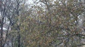 Χειμερινό χιόνι απόθεμα βίντεο