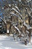 Χειμερινό όνειρο στις 2 Μαρτίου Στοκ Εικόνες