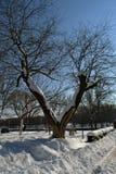 Χειμερινό όνειρο στις 4 Μαρτίου Στοκ Φωτογραφία