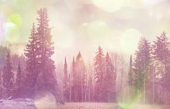 Χειμερινό forestInstagram φίλτρο στοκ φωτογραφία με δικαίωμα ελεύθερης χρήσης