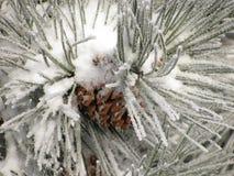 Χειμερινό pinecone Στοκ Εικόνα