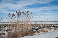 Χειμώνας - άνοιξη στοκ εικόνα