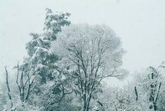 Χειμώνας, δέντρα κάτω από το χιόνι στοκ φωτογραφίες με δικαίωμα ελεύθερης χρήσης