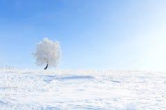χειμώνας δέντρων εικόνας σχεδίου Μόνο παγωμένο δέντρο στο χειμερινό χιονώδη τομέα Στοκ Εικόνες