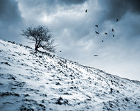 χειμώνας δέντρων εικόνας σχεδίου Στοκ φωτογραφία με δικαίωμα ελεύθερης χρήσης