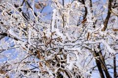 χειμώνας δέντρων εικόνας σχεδίου Στοκ εικόνες με δικαίωμα ελεύθερης χρήσης