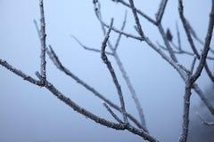 χειμώνας δέντρων εικόνας σχεδίου Στοκ φωτογραφίες με δικαίωμα ελεύθερης χρήσης