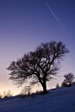 χειμώνας δέντρων εικόνας σχεδίου στοκ εικόνα με δικαίωμα ελεύθερης χρήσης