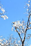 χειμώνας δέντρων εικόνας σχεδίου Στοκ Φωτογραφίες