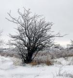 χειμώνας δέντρων εικόνας σχεδίου Στοκ Φωτογραφία