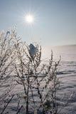 χειμώνας ήλιων τοπίου Στοκ Εικόνες