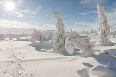 χειμώνας ήλιων Στοκ Εικόνα