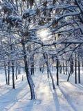 χειμώνας ήλιων στοκ εικόνες