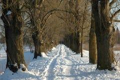 χειμώνας αλεών Στοκ Φωτογραφία