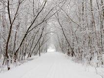 χειμώνας αλεών Στοκ εικόνες με δικαίωμα ελεύθερης χρήσης