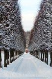 χειμώνας αλεών arhangelskoe Στοκ φωτογραφίες με δικαίωμα ελεύθερης χρήσης