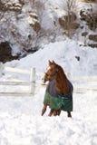 χειμώνας αλόγων Στοκ εικόνες με δικαίωμα ελεύθερης χρήσης