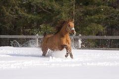 χειμώνας αλόγων Στοκ φωτογραφίες με δικαίωμα ελεύθερης χρήσης