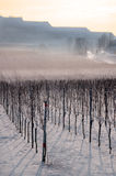 χειμώνας αμπελώνων τοπίων Στοκ Εικόνα