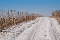 χειμώνας αμπελώνων χιονιού Στοκ εικόνα με δικαίωμα ελεύθερης χρήσης