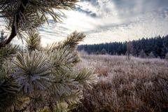 χειμώνας αρχής Στοκ εικόνες με δικαίωμα ελεύθερης χρήσης