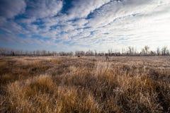 χειμώνας αρχής Στοκ Εικόνες
