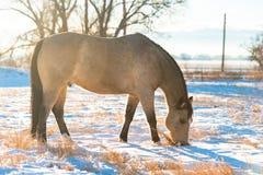 Χειμώνας αλόγων δερμάτων ελαφιού Στοκ Εικόνες