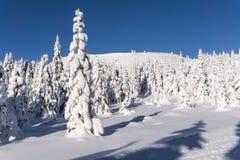 χειμώνας βουνών τοπίων της Βουλγαρίας bansko καλυμμένα φρέσκα δέντρα χι&omi Στοκ εικόνες με δικαίωμα ελεύθερης χρήσης
