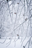 χειμώνας γραμμών στοκ φωτογραφία με δικαίωμα ελεύθερης χρήσης