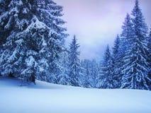 χειμώνας δέντρων έλατου Στοκ εικόνες με δικαίωμα ελεύθερης χρήσης