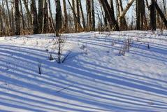χειμώνας δέντρων εδάφους &n Στοκ Εικόνα