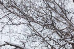 χειμώνας δέντρων εικόνας σχεδίου γυμνοί κλάδοι Στοκ Εικόνες