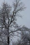 χειμώνας δέντρων εικόνας σχεδίου Όλα καλύπτονται με το χιόνι Μετά από τις χιονοπτώσεις Πουλιά στο δέντρο Στοκ φωτογραφίες με δικαίωμα ελεύθερης χρήσης