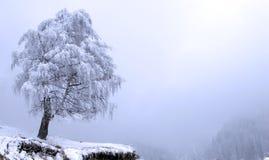 χειμώνας δέντρων μοναξιάς Στοκ Εικόνες
