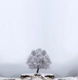 χειμώνας δέντρων μοναξιάς Στοκ εικόνα με δικαίωμα ελεύθερης χρήσης