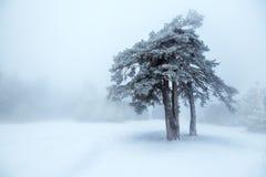 χειμώνας δέντρων ομίχλης Στοκ Φωτογραφία
