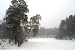 χειμώνας δέντρων πάρκων Στοκ Φωτογραφία