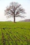 χειμώνας δέντρων πεδίων συ&g Στοκ Εικόνες