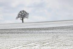χειμώνας δέντρων πεδίων Στοκ Φωτογραφίες