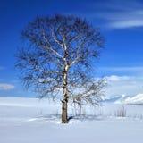 χειμώνας δέντρων πεδίων Στοκ φωτογραφία με δικαίωμα ελεύθερης χρήσης