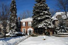 χειμώνας δέντρων πεύκων σπι& στοκ εικόνα με δικαίωμα ελεύθερης χρήσης