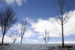 χειμώνας δέντρων σκηνής Στοκ Εικόνες