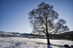 χειμώνας δέντρων σκιαγραφιών Στοκ Εικόνες