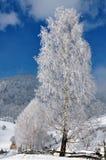 χειμώνας δέντρων της Ρουμ&alph Στοκ φωτογραφίες με δικαίωμα ελεύθερης χρήσης