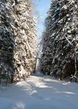 χειμώνας δέντρων τοπίων Στοκ Εικόνα