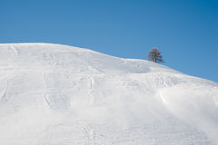 χειμώνας δέντρων χιονιού μπλε ουρανού Στοκ φωτογραφία με δικαίωμα ελεύθερης χρήσης